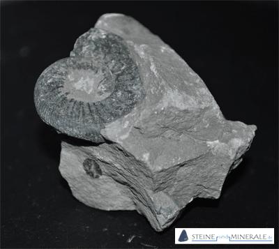 Glaukonit - Mineral und Kristalle