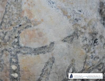 fos-4-3-seeigel-02 - Mineral und Kristalle