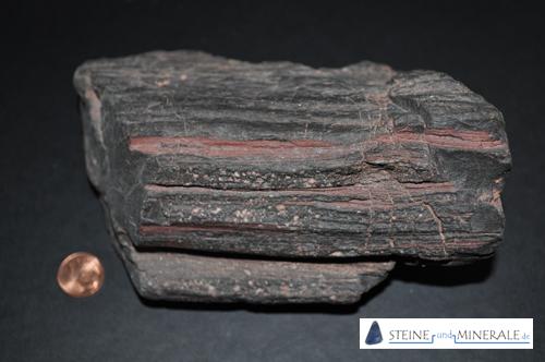 FossilienSteckbrief Versteinertes Holz